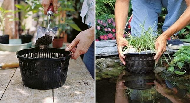высадка растений в водоем