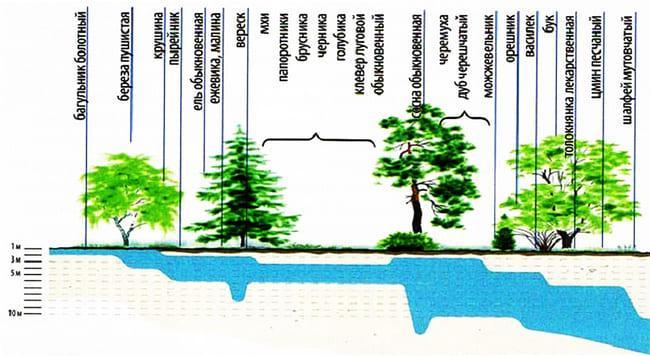 определение грунтовых вод по растительности