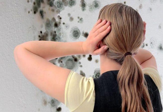 Плесень и грибок на стенах дома